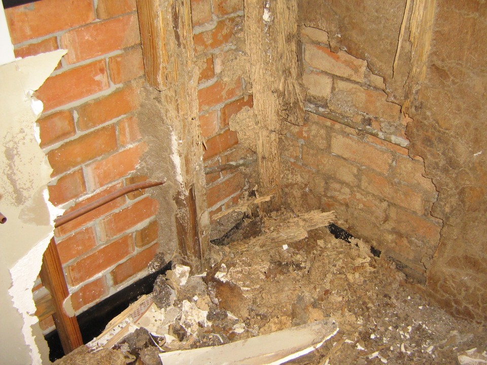 brisbane termite prices on timber home