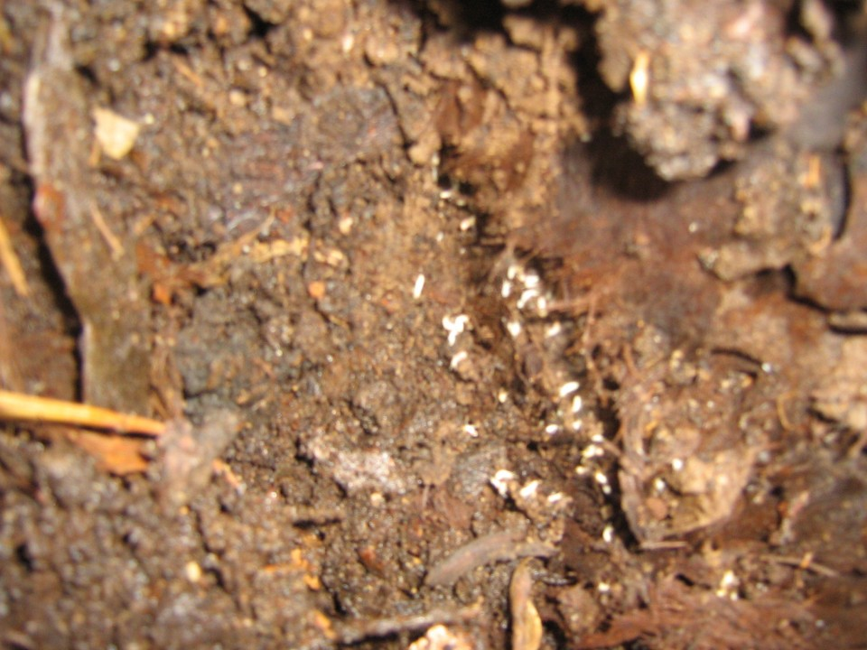 Termite-Damage-Brisbane-960x600