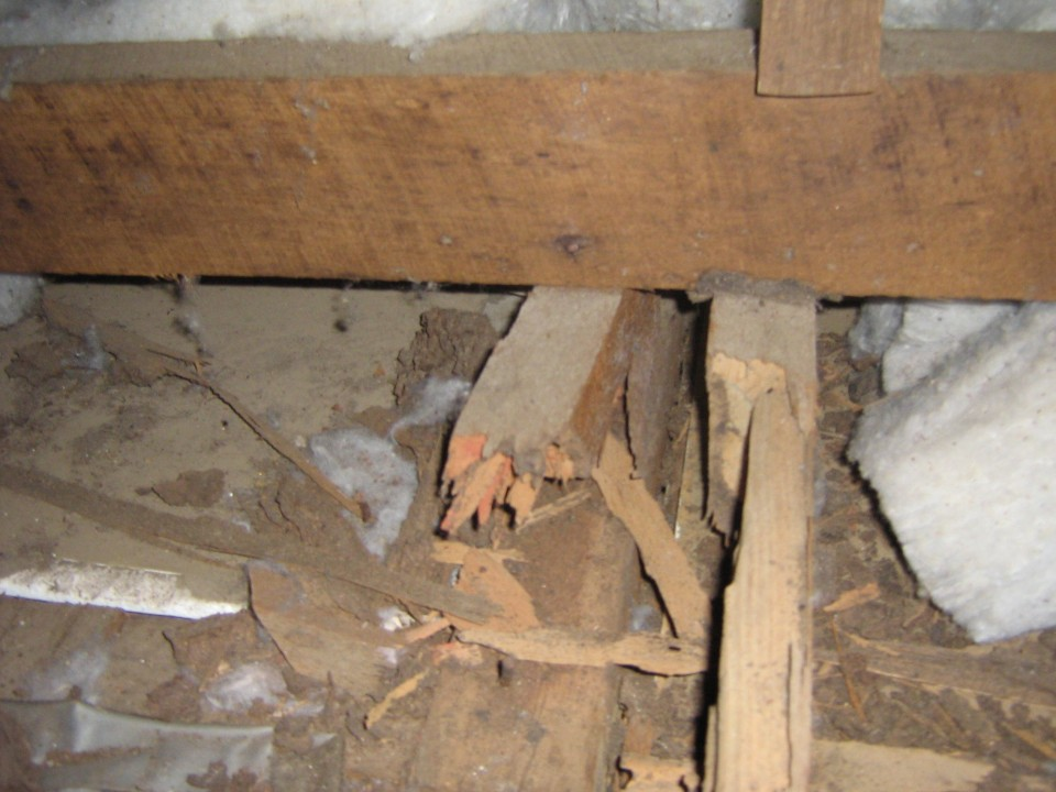 timber termites entry treatment