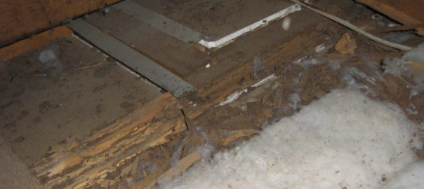 timber termites roof treatment