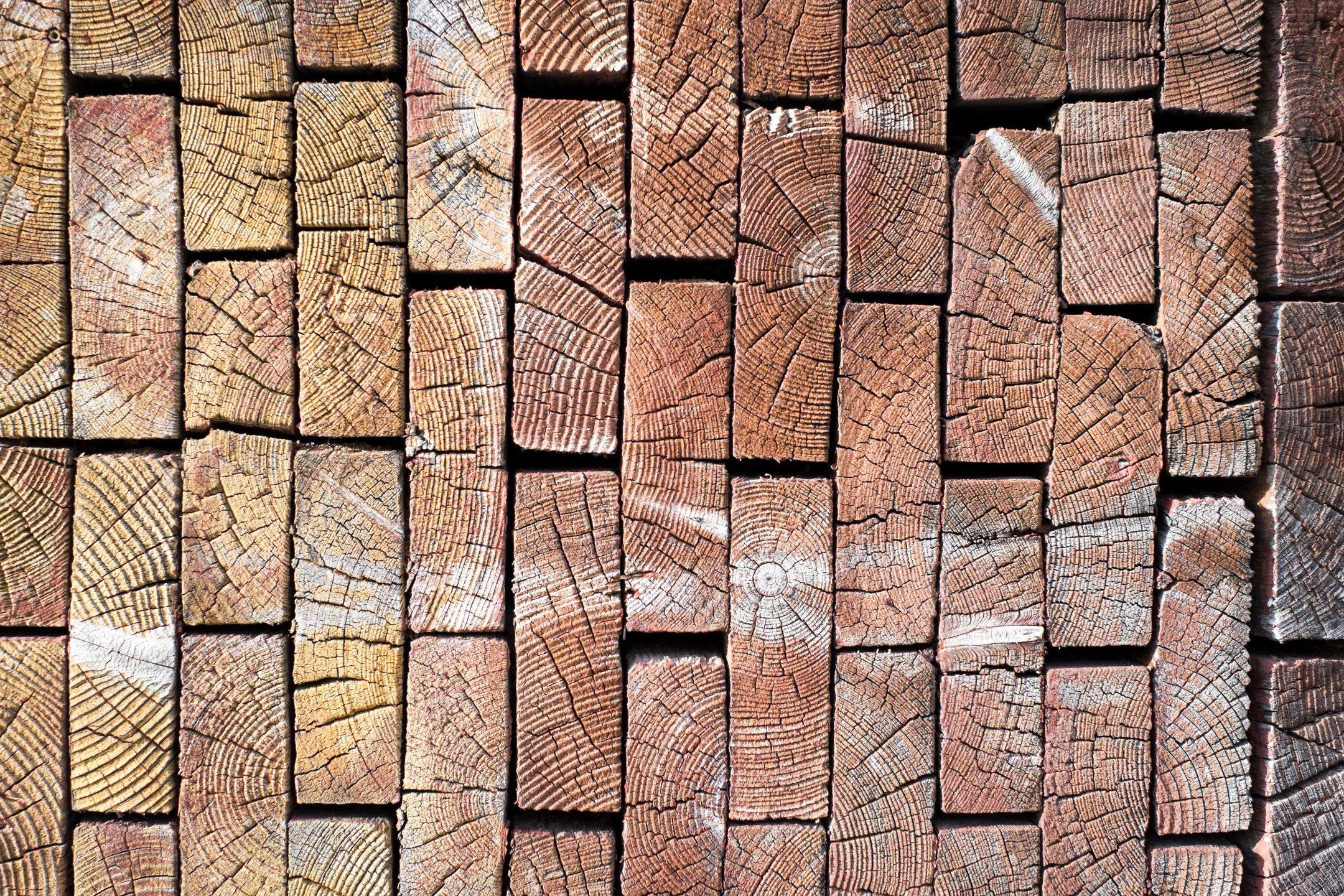 timber pest control