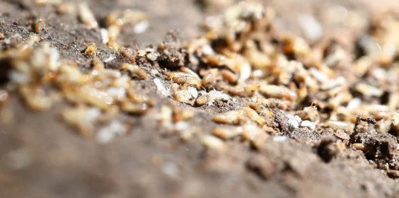 termite mound control