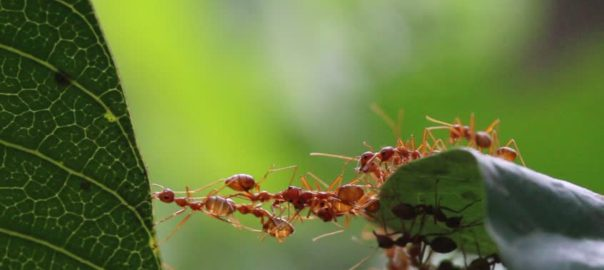 ants pest control prices
